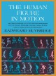 Go to record The human figure in motion